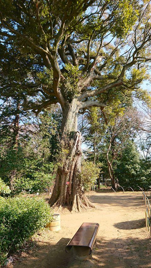 tree480.jpg